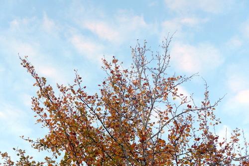 Un bel arbre de décembre !