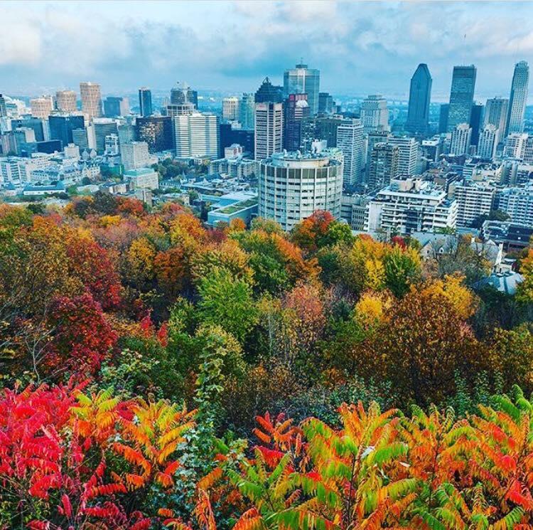 Automne a Montréal