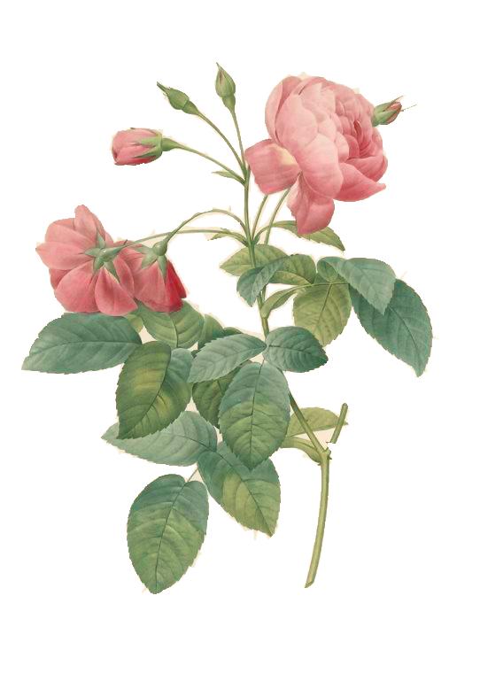 [cerise+] Flowers - Signature complète NBZ1VLsuLyx_KvHCi64jeY38Fb0