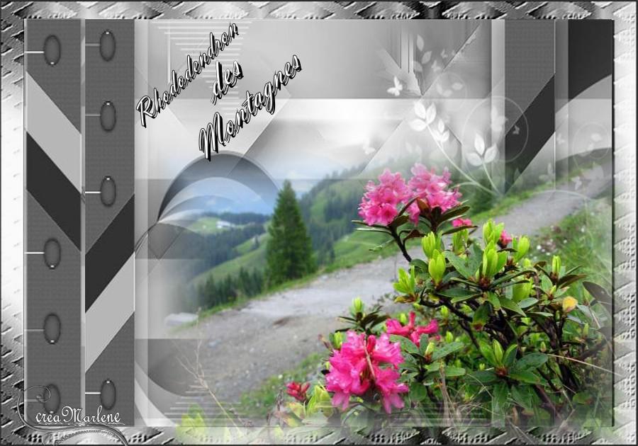 Le rhododendron des montagnes