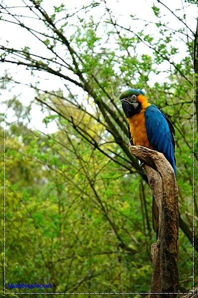 Zoo-Douai 0862