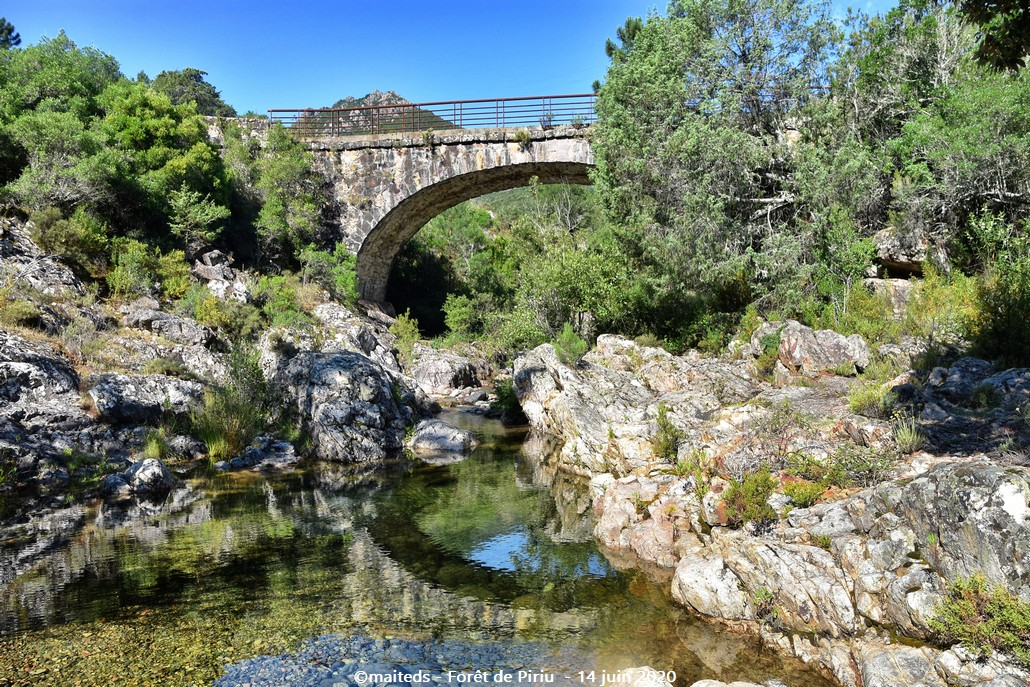 Forêt de Piriu - Corse