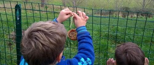 Partir à la découverte des oiseaux de nos jardins