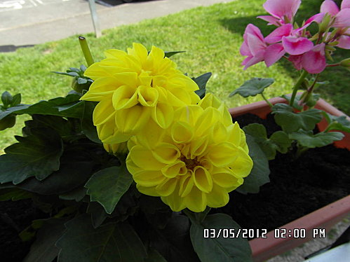 jardinieres-006.JPG