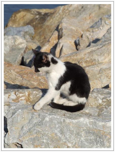 chat noir et blanc assis sur un rocher