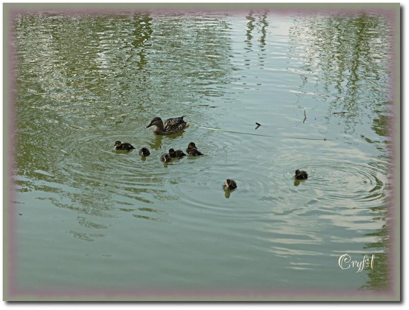 Autour de l'étang de Fntvenelle