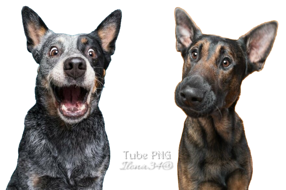 Tubes chiens