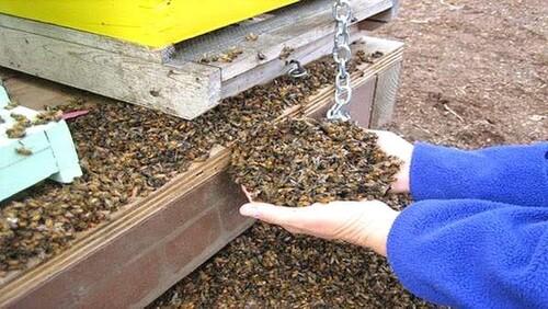 Connaissez-nous vraiment les abeilles ?