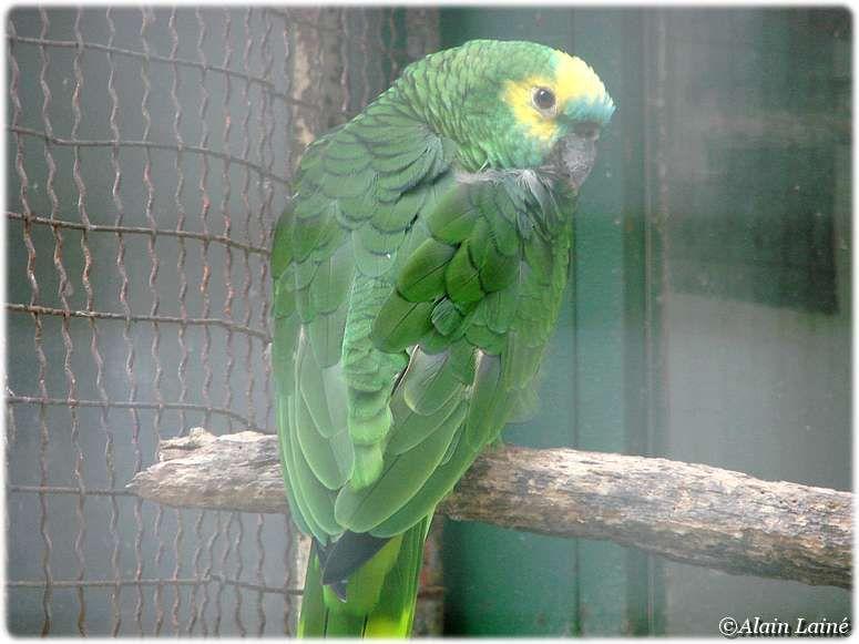 Parc_ornithologique_17Juil09_20