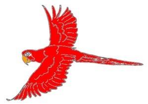 perroquet--rouge-vole.jpg