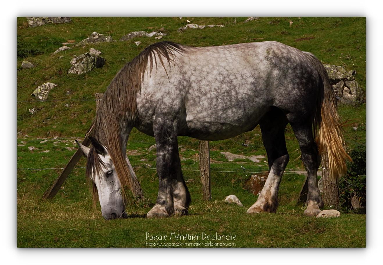 Les chevaux à la Fruitière...