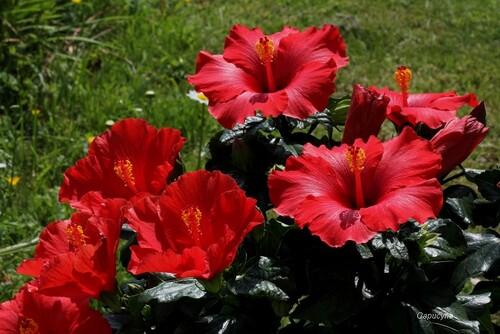 Scènes de jardin en mai...2