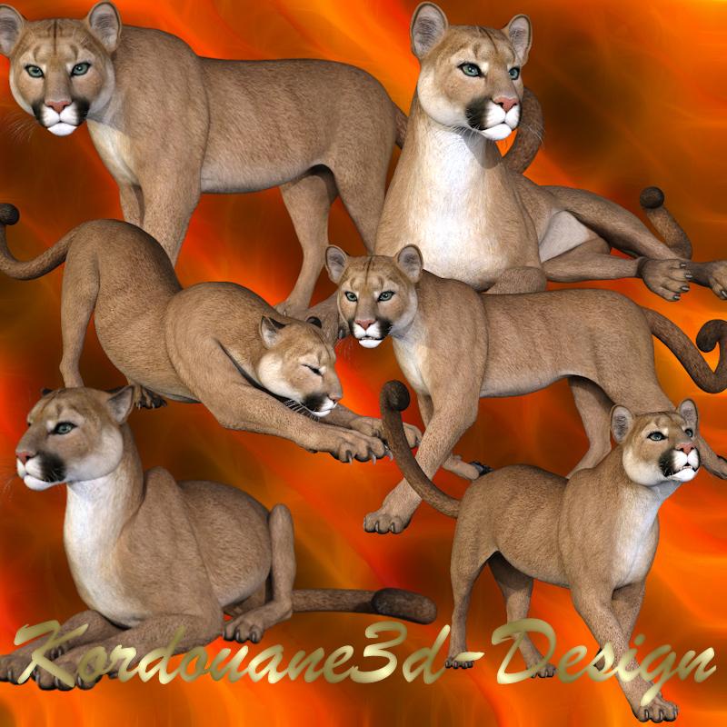 Cougar adulte (image-tube-render)