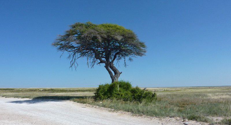Paysages Namibiens