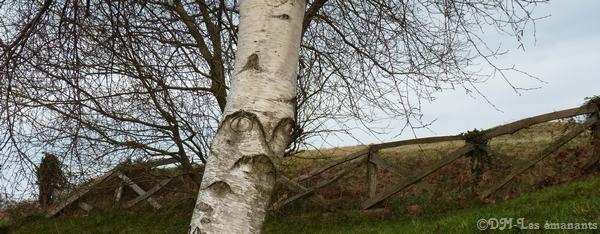 Les arbres et leurs symboles