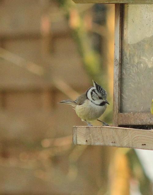 Dix-sept sortes d'oiseaux qui ont fréquenté mon jardin durant l'hiver 2015-2016...