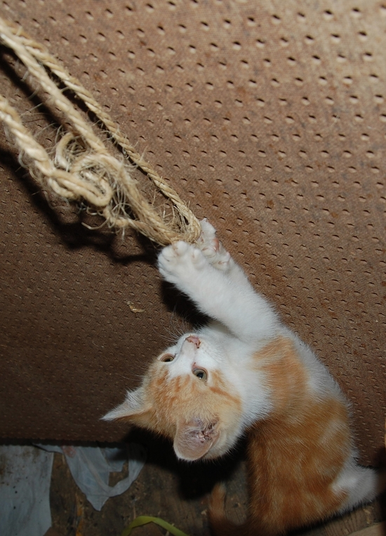 chaton04juilletn