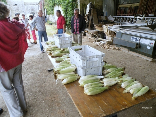 prq-epluchettes de blé d'inde 2011 (1) (copier)