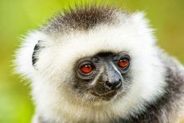 VOYAGE : Madagascar