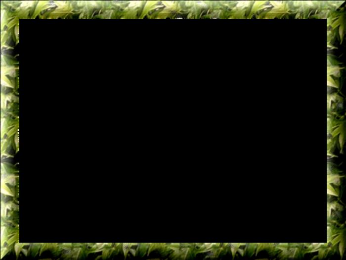 Cadres Verts   (2)