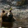 Canada 2016 : ours au zoo de St Félicien
