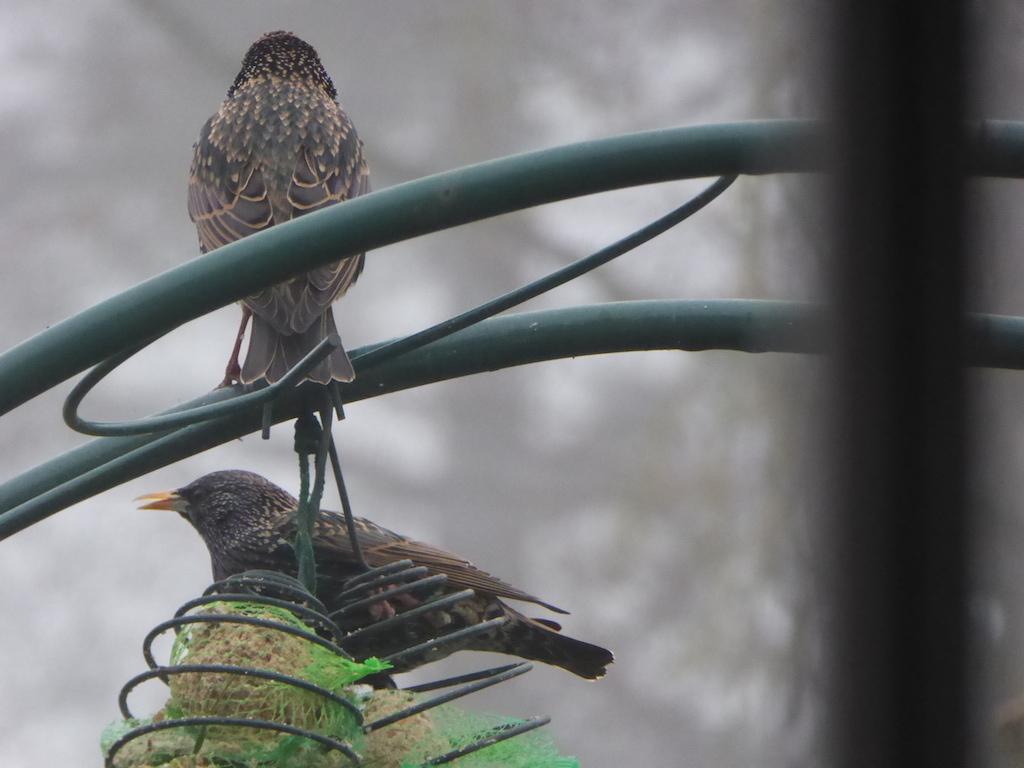 Les oiseaux et deux nouvelles sortes!