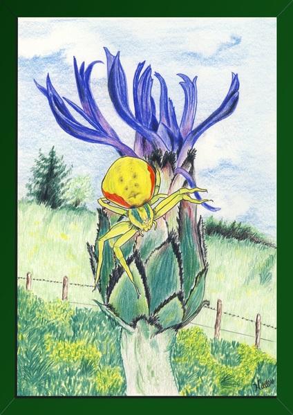 Dessin aux crayons de couleur, l'araignée crabe Thomise variable (Misumena vatia) Thomisidae