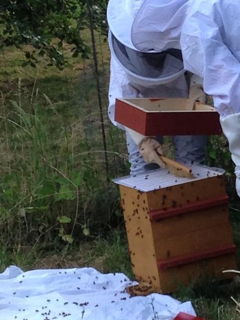 mise en ruche