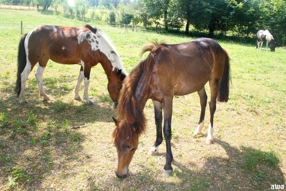 C'est bien les chevaux mais ?