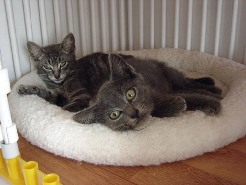 Deux chatons trouvés en forêt