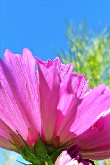 Poésie florale :