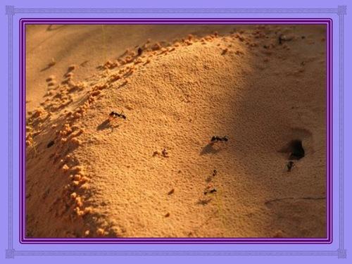 La fourmi qui volait