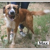 Max X 1