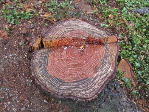 coupe bois souche 2234