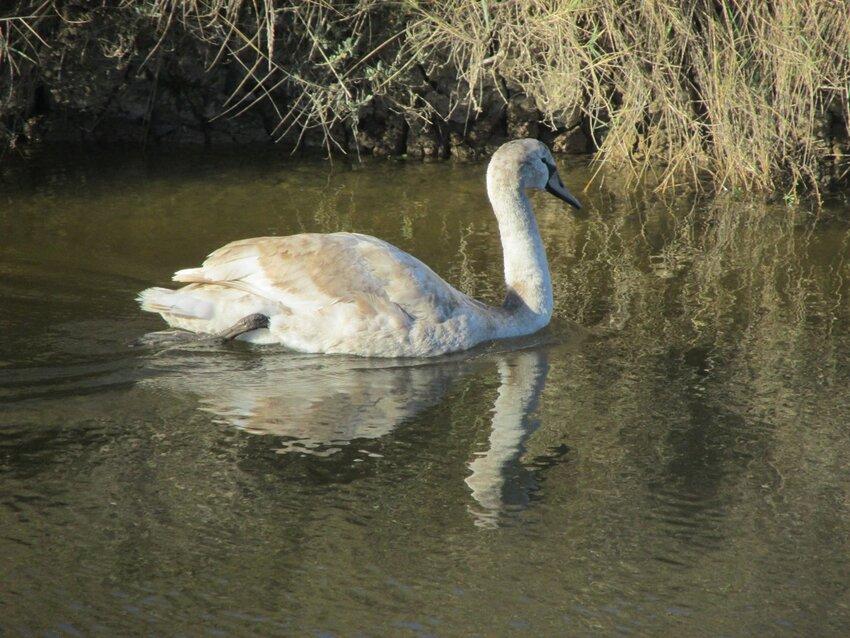 Dimanche 27 novembre balade dans les marais du Douhet