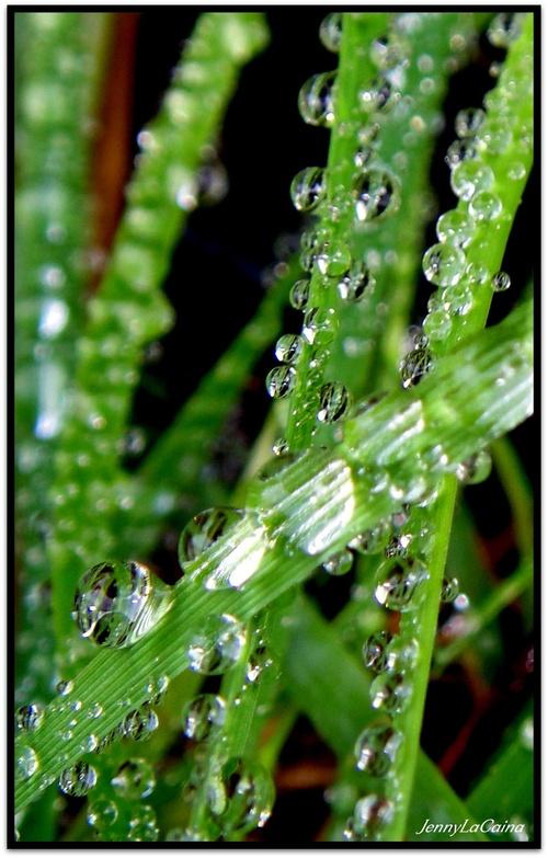 Perles d'herbe