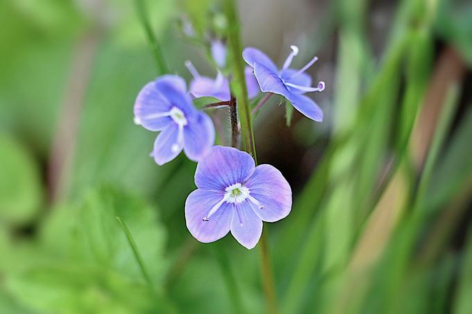 Les fleurs minuscules du jardin !