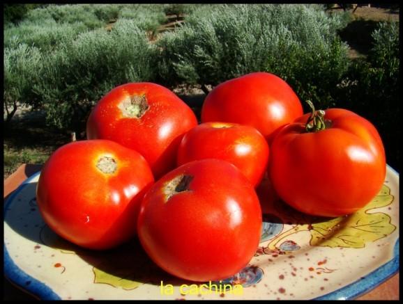 tomates-jardin--3-.JPG
