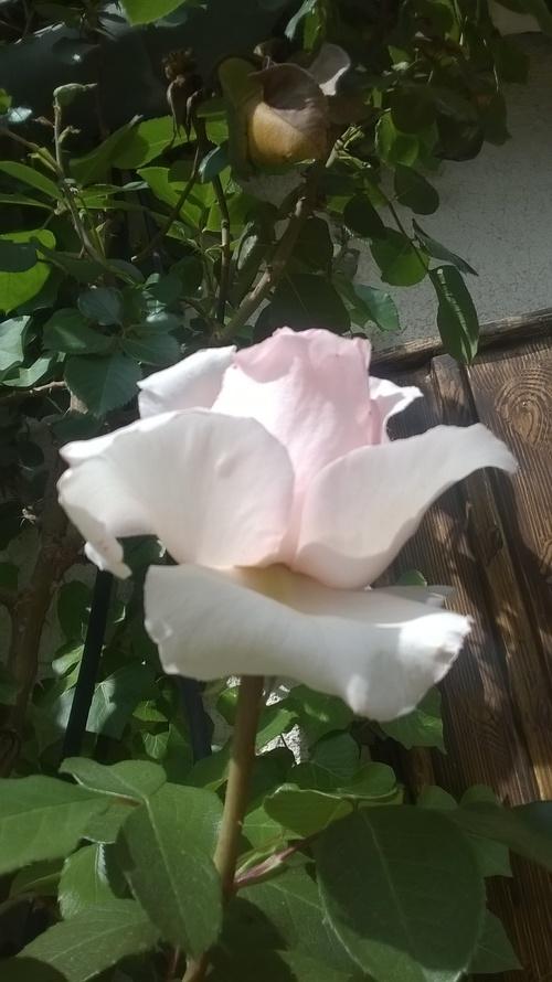 Mon jardin, drôle de primtemps est la ..