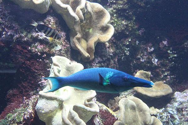 aquarium La Rochelle(24)