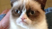 the-grumpy-cat.jpg