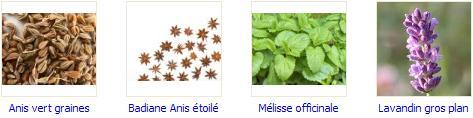 Cuisine : délicieux rafraîchissements aux plantes