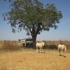 056 Repas après bamako vers Bougounj
