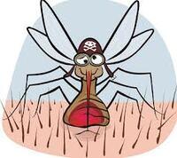 Santé : Comment se protéger efficacement des moustiques ?