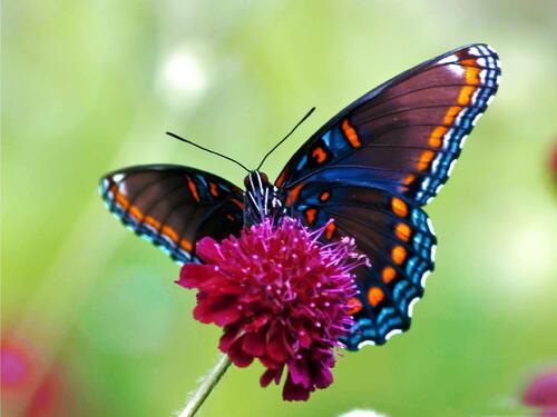 La légende du papillon ,