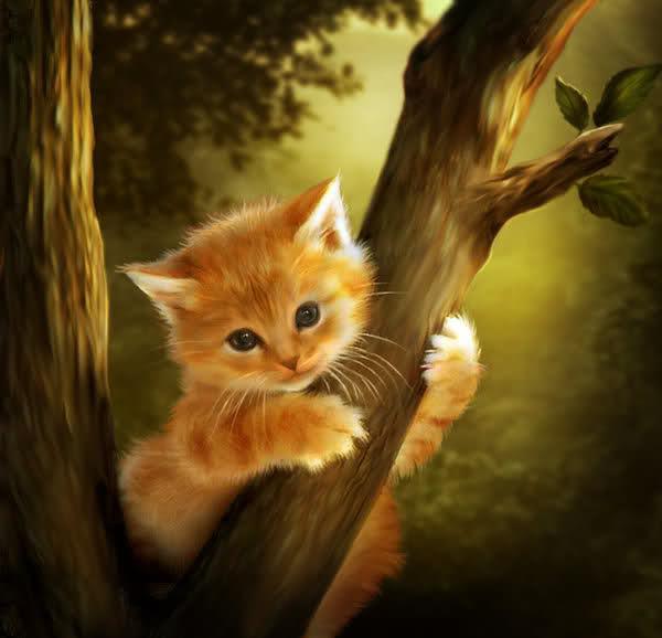 Pétiton pour Limoux et ses chats