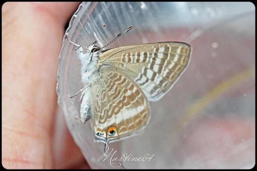 Chenille et papillon