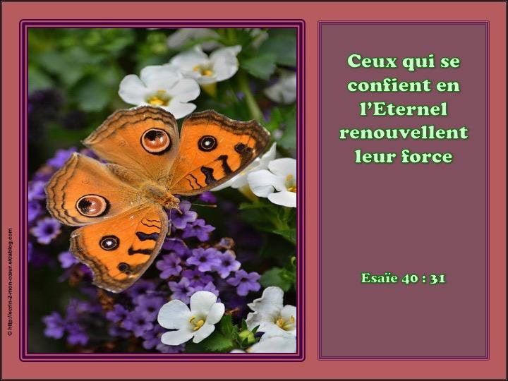 Ceux qui se confient en L'Eternel renouvellent leur force - Esaïe 40 : 31
