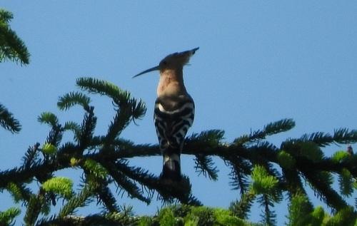 ... un joli oiseau...