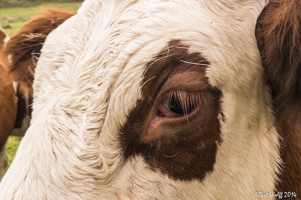 Des vaches brunes et blanches